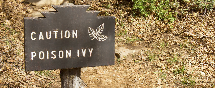 How Can I Prevent Poison Ivy Rashes?